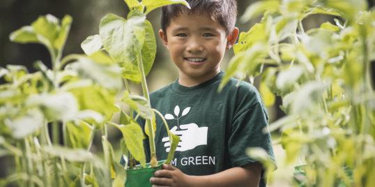 A boy with young plants in a plant nursery VBFM5 CV